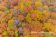 63876-02501 Aerial view of fall color trees Stephen A. Forbes State Park Marion Co. IL