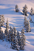 Snow covered trees cast long shadows in early morning light, Garibaldi Provincial Park, British Columbia, Canada.