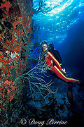 scuba diver examines boulders encrusted with marine life,<br /> St. Barts, ( Eastern Caribbean Sea )   MR 95
