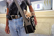 Man carrying his little dog in a sports bag during a walk in the center of the Czech capital Prague.