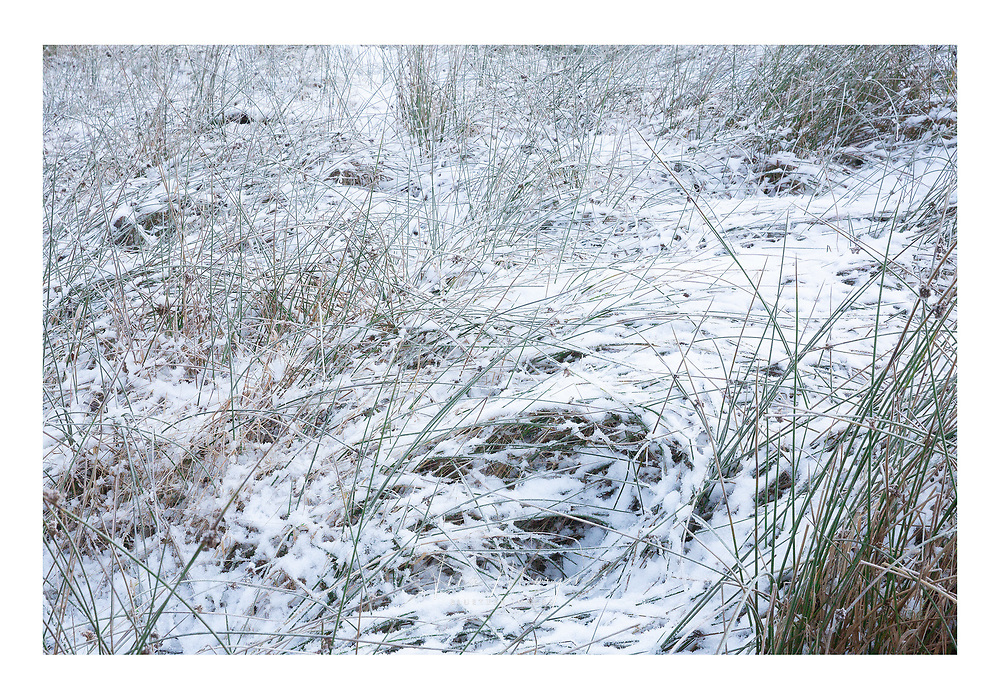 Pattern of snow covered grasses in the Cairngorms with a feeling of gravitational pull