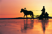 Horse drawn sled on ice<br /> Lake Hovsgol<br /> Northern Mongolia