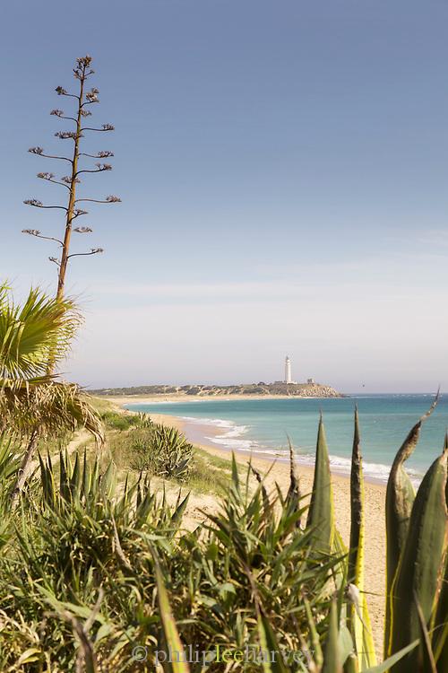 Plants by Zahora beach in Cadiz, Spain