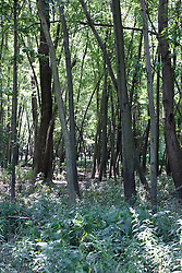 23 August 2013:   A path wanders through the woods and timber as sunlight filters through to the water and flowers highlighting the color on the forest floor near Swisher Bridge over Salt Creek north of Clinton Lake in Central Illinois