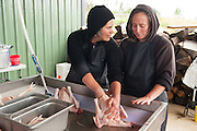 "Jen Schwab - left - instructs a visitor in the finer points of hand processing a chicken. Small family farmers Matt and Jen Schwab operate ""Inspiration Plantation"" an organic farm outside of Ridgefield, Washington. The couple raises and harvests their own heritage chickens, and seasonally inviting their customers in the community to visit their farm and help with the poultry harvest. Once the birds are killed, they're placed in a bath of near boiling water to loosen the feathers and then rotated in a washing machine-like tub with rubber appendages that pull the feathers out. Visiting helpers can participate in every step of the process and receive a fresh chicken for their efforts."