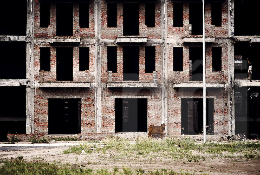A cow stands in front of a brick facade of an unfinished building, in Hanoi, Vietnam, Southeast Asia