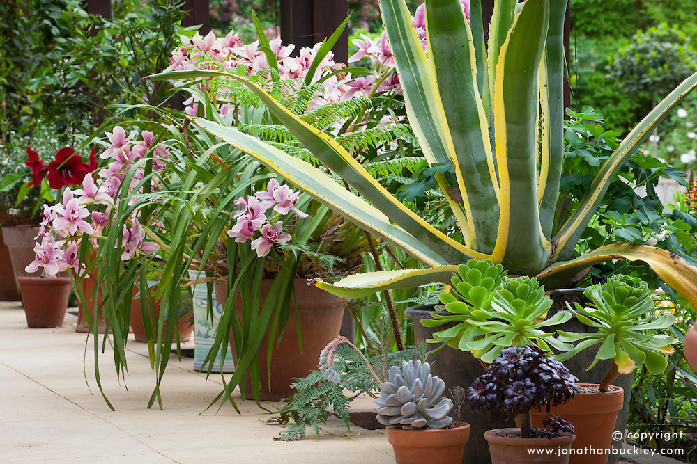 Container display in The Plant House at Hidcote Manor Garden including Agave americana, orchids and amaryllis