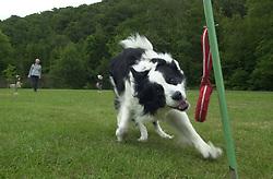 Eddie Sander with his Dogs Jackson and Inka<br /><br />18 June 2004<br /><br />Copyright Paul David Drabble<br /> [#Beginning of Shooting Data Section]<br />Nikon D1 <br /> Focal Length: 26mm<br /> Optimize Image: <br /> Color Mode: <br /> Noise Reduction: <br /> 2004/06/18 09:24:48.3<br /> Exposure Mode: Manual<br /> White Balance: Auto<br /> Tone Comp: Normal<br /> JPEG (8-bit) Fine<br /> Metering Mode: Center-Weighted<br /> AF Mode: AF-S<br /> Hue Adjustment: <br /> Image Size:  2000 x 1312<br /> 1/200 sec - F/8<br /> Flash Sync Mode: Not Attached<br /> Saturation: <br /> Color<br /> Exposure Comp.: 0 EV<br /> Sharpening: Normal<br /> Lens: 17-35mm F/2.8-4<br /> Sensitivity: ISO 200<br /> Image Comment: <br /> [#End of Shooting Data Section]