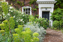 The front garden at Docwra's Manor with Rosa 'Albéric Barbier', Teucrium fruticans and Euphorbia characias subsp. wulfenii