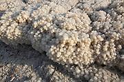 Israel, Dead Sea, salt sediment on the shore