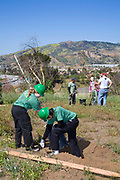 LA Conservation Corps plant a tree at a Tree planting to reforest Stetson Ranch Park in Sylmar after the 2008 devastating wildfire. Organizations such as LA Conservation Corps, Tree People, North East Trees joined Million Trees LA and other volunteers to plant 150 trees to celebrate Earth Day 2009. California, USA.