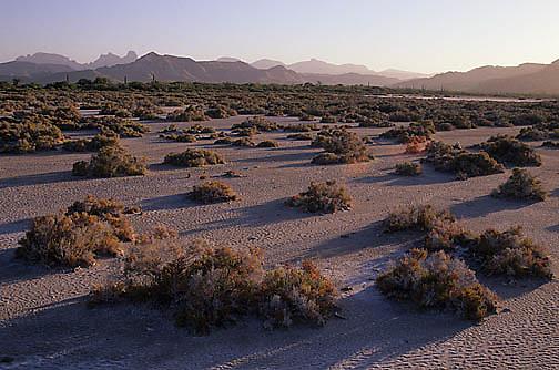 Mexico, Dried estuary near Timbivichi. Baja, Mexico.