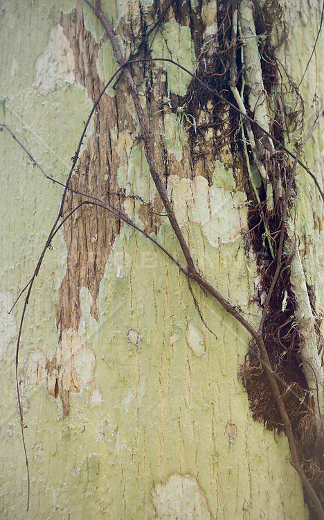 detail of a tree in The Everglades
