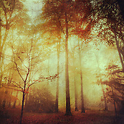 Misty forest on a fall morning - texturized photograph