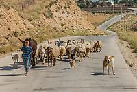Al-Beidha, Jordan - May 9, 2013: young shepherd boy and flock of sheep near Al-Beidha in Jordan middle east on may 9th, 2013