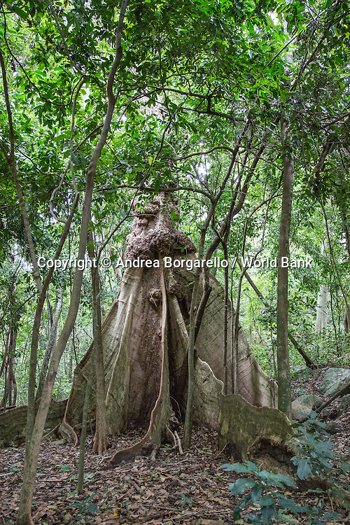 Quirimbas National Park, Mozambique.<br /> Area of Cabo Delgado Province.<br /> Taratibu Area.