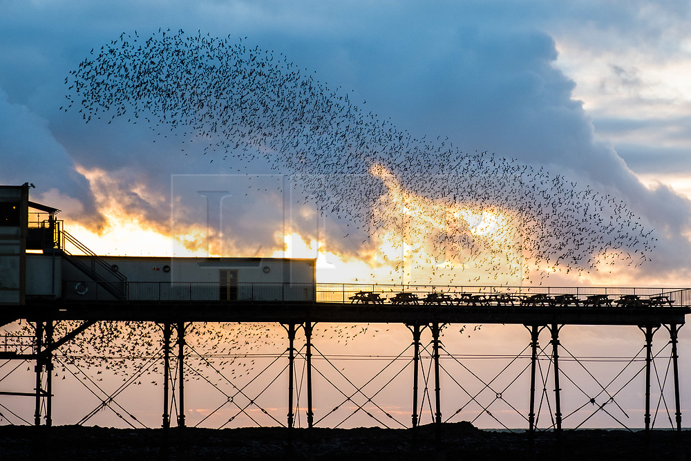 © London News Pictures. 22/10/2017. Aberystwyth, UK. After the gale force winds  and wild seas of Storm Brian, the thousands of tine starlings still return in the evening to perform their intricate dance in the air above the town before swooping down to roost on the legs of the seaside pier in Aberystwyth on the Cardigan Bay coast of west wales. Photo credit Keith Morris/LNP<br /> <br /> <br /> <br /> <br /> Photo © Keith Morris