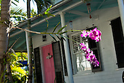 Wild orchids grow at a house in Key West, Florida.
