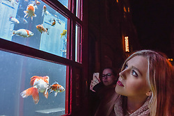 """© Licensed to London News Pictures. 18/01/2018. LONDON, UK. A girl views """"Aquarium"""" by Benedetto Bufalino & Benoit Deseille.  A BT phone box has been converted into an aquarium with live goldfish in Earlham Street, Seven Dials.  Opening night of Lumiere London, the capital's largest arts festival commissioned by The Mayor of London and produced by Artichoke.  Light installations by leading artists have been set up, both north and south of the river for the public to view 18-21 January. Photo credit: Stephen Chung/LNP"""
