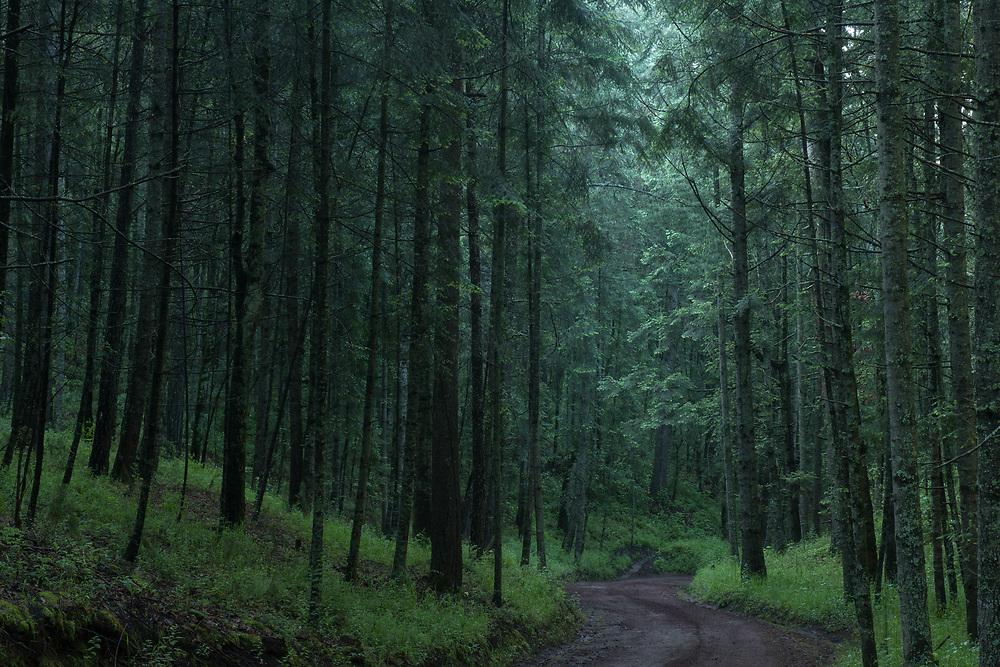 Bosque de luciérnagas in Tlaxcala. Client: Mexico Desconocido