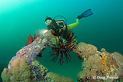 diver explores the wreck of the San Quentin or San Quintin, a Spanish gunboat sunk in 1898 during the Spanish-American War between Grande and Chiquita Islands at the entrance to Subic Bay, Philippines; wreckage is scattered over a reef at a depth of 9-18 m<br /> MR 379
