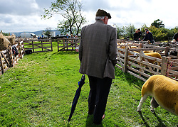 © Licensed to London News Pictures.26/08/15<br /> Egton, UK. <br /> <br /> A man stands looking into the sheep pens at the 126th Egton Show in North Yorkshire. <br /> <br /> Egton is one of the largest village shows in the country and is run by a band of voluntary helpers. <br /> <br /> This year the event featured wrought iron and farrier displays, a farmers market, plus horse, cattle, sheep, goat, ferret, fur and feather classes. There was also bee keeping, produce and handicrafts on display.<br /> <br /> Photo credit : Ian Forsyth/LNP