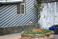 Boy standing in an outdoor courtyard, Wenzhou, China.