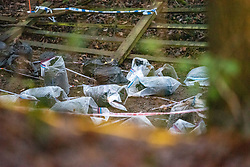 "© Licensed to London News Pictures. 10/12/2019. Gerrards Cross, UK. Police evidence bags sit on woodland floor as the Metropolitan Police Service continues a search operation in Gerrards Cross, Buckinghamshire. Police have been in the area conducting operations on Hedgerley Lane since Thursday 5th December 2019. In a press statement issued on 7th December a Metropolitan Police spokesperson said ""Officers are currently in the Gerrards Cross area of Buckinghamshire as part of an ongoing investigation.<br /> ""We are not prepared to discuss further for operational reasons."" No further updates have been issued as of 10th December. Photo credit: Peter Manning/LNP"