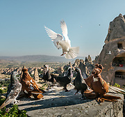 Pigeons rise above the Cappadocia landscape in Goreme.