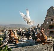 Pigeons rise above the Cappadocia landscape in Goreme.