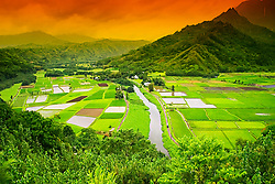 freshwater, Hanalei River, Taro ponds and wetland, Hanalei National Wildlife Refuge, Kauai, Hawaii, Pacific Ocean