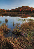 peak autumn foliage at sunrise, Belvidere Pond, near Belvidere, Vermont