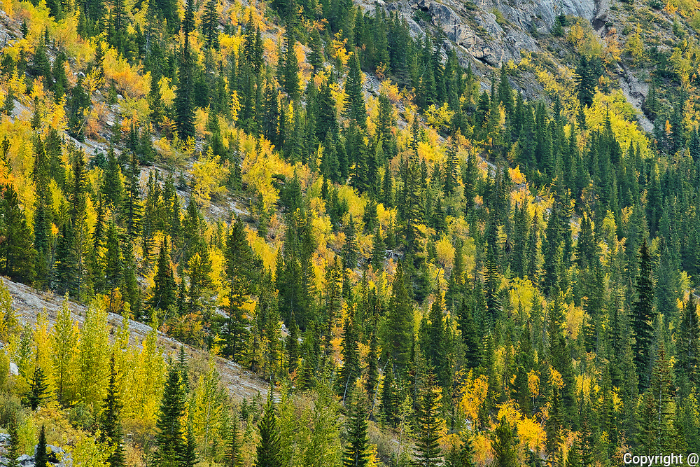 Autumn colors at WIlcox Pass.  Icefields Parkway.<br />Jasper National Park<br />Alberta<br />Canada