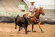 Will James Roundup, Ranch Rodeo, Working Ranch Horse, Hardin, Montana, Tad Haugen