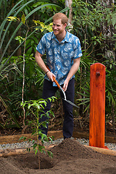 The Duke of Sussex plants a tree using a spade used by Queen Elizabeth II on her visit to Fiji in 1953, at a dedication of the Colo-i-Suva forest to the Queen's Commonwealth Canopy in Suva, Fiji, on day two of the royal couple's visit to Fiji.