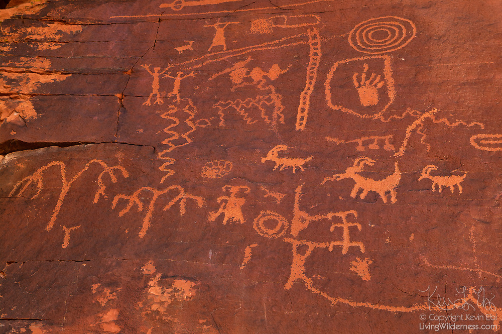 Ancient Anasazi petroglyphs cover a rock face, known as Atlatl Rock in the Valley of Fire State Park, Nevada. The rock art may be more than 1,500 years old.