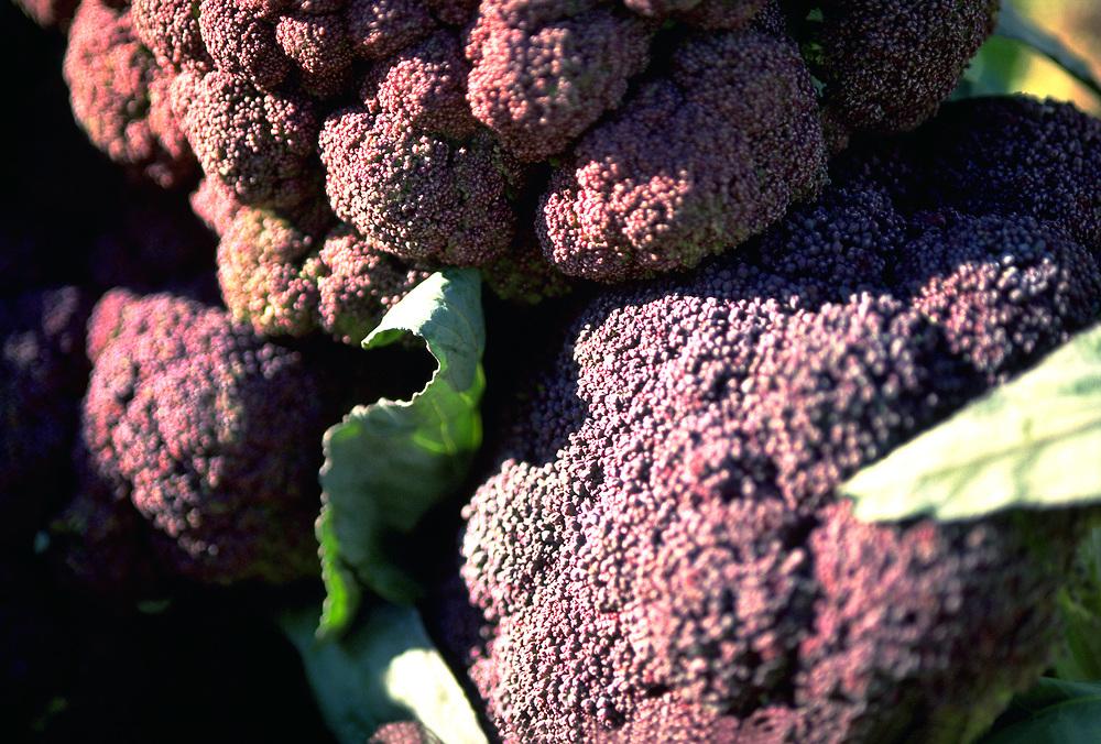 Close up selective focus photograph of a few heads of Purple Cauliflower