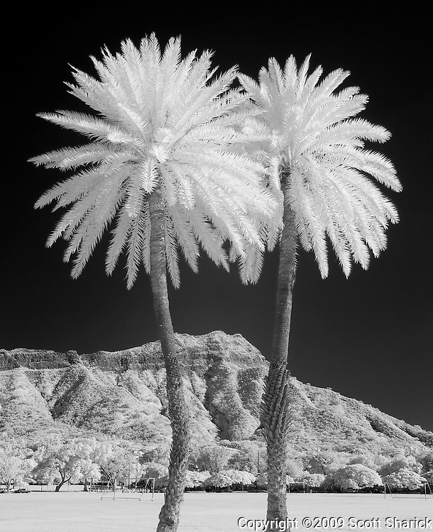 An infrared image of two palm trees in front of Diamond Head. Taken from Kapiolani Park on Oahu, Hawaii.
