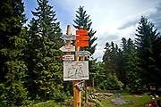 Drogowskazy szlakowe nieopodal  Biskupiej Kopy – góry o wysokości 890 m n.p.m. w paśmie Gór Opawskich  w Sudetach Wschodnich, leżący na granicy Polski i Czech.