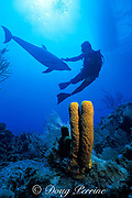 Spot, a wild, lone, sociable bottlenose dolphin, Tursiops truncatus, with pal Jason Belport, Cayman Brac ( Caribbean Sea ) MR 281