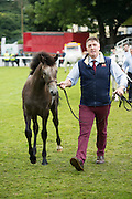 at the 93rd annual Connemara Pony show in Clifden Co. Galway  Photo:Andrew Downes, XPOSURE <br />   Photo: Andrew Downes, Xposure.