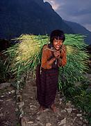 Woman carries grain for winter feed, Mo Chu gorge, Central Bhutan