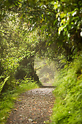 Landscape with lush foliage and footpath along Routeburn Track between Lake Mackenzie to Divide Shelter, South Island, New Zealand