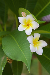 Flowers, Choeung Ek