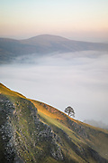 Golden sunlight illuminates the limestone slopes of Winnats Pass along with its lone tree. In the distance, Lose Hill stands above a glorious temperature inversion which fills the Hope Valley. An autumn scene at sunrise in the Derbyshire Peak District, England, UK.