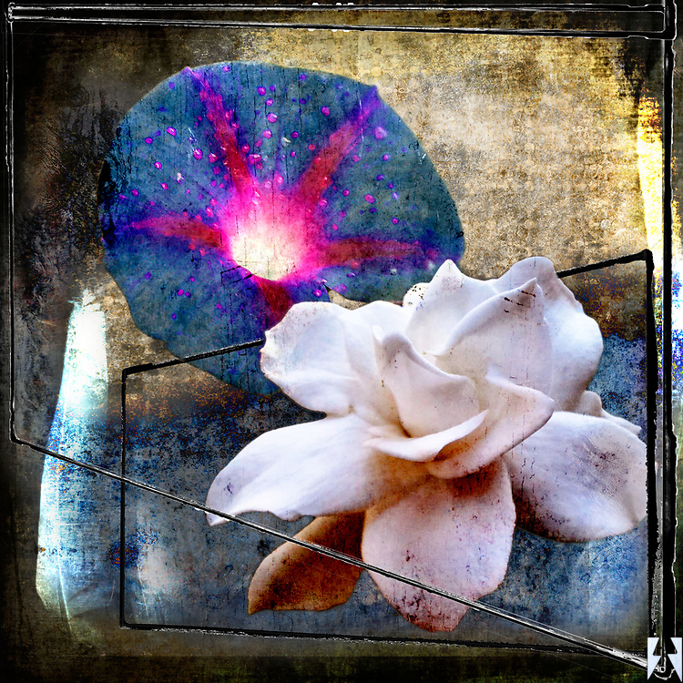 Grunge PhotoArt canvas of autumn flowers, an Ipomoea and a Gardenia blossom with feathers and lines in the heavy textures.