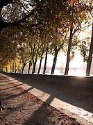 Tree lined path along the River Seine, Paris, France