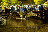 """BBOA Bull Riding At Mariposa Co. Fairgrouds 2015 """"Monsters in Mariposa"""""""