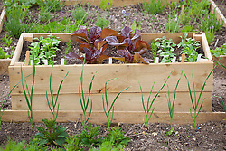 Wooden trough used to grow salad leaves and radish