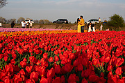 Tourists at the flowerfield in the bulbregion in North of Holland during Corona times.